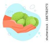 broccoli in the hands. healthy... | Shutterstock .eps vector #1887582973