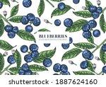 blueberries. hand drawn... | Shutterstock .eps vector #1887624160