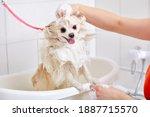 Pet In Grooming Salon  Domestic ...