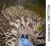 Standing On Dead Tree Roots