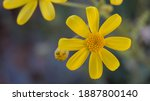 Pollen Flower With Yellow...