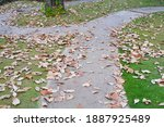 Dried Leaves Fall On Curved...