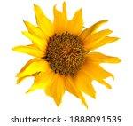 Beautiful Single Yellow...