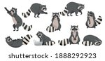 Funny Raccoon with Dexterous Front Paws and Ringed Tail Vector Set