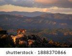 Lynx In Mountain  Wild Cat In...