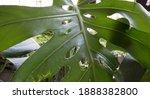 Exotic Flora. Closeup View Of A ...