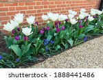 Spring flowers in a border in a ...