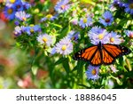 Horizontal Photo Of Monarch...