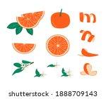 set of orange fruit peel ...   Shutterstock .eps vector #1888709143