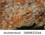 Red Moss Over The White Stone