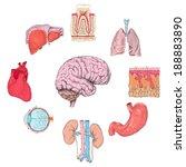 human organs set of lungs heart ... | Shutterstock .eps vector #188883890