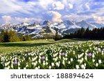 meadow of crocus in the swiss...   Shutterstock . vector #188894624