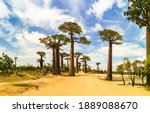 Panoramic Avenue Of The Baobabs ...