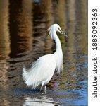 Beautiful White Feathers On...