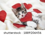 Valentines Day Cat. Small...