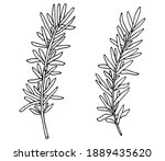 hand drawing of rosemary branch ... | Shutterstock .eps vector #1889435620