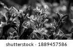 Black And White Bush Foliage ...