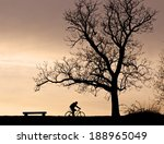 Silhouettes Of A Tree  A Bench...