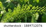 Green Lush Stem Of Grass ...