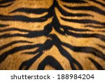 Close Up Tiger Skin Texture