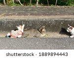 Lovely Family Cat. Tabby Cat...
