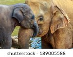 Stock photo cuddling elephant and baby elephant 189005588