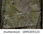 A Sheet Of Rusty Mossy Iron On...
