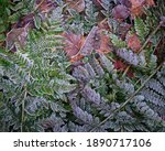 Frosty Ferns And Brown Leaves...