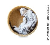 Stock photo a cat sleep in the bucket isolated on white background 189082118