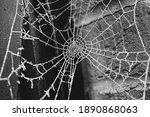 Frozen Spider Cobweb On A...
