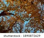 Stunning Autumn Woodland Canopy ...