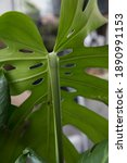 Selective Focus On Plant Stem....