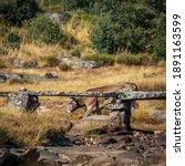 Antique Stone Bridge Over Dry...