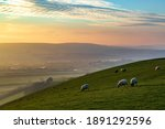 Sheep grazing on a South Downs hillside on a winters afternoon