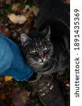 Autumn Cat Cuddle Jeans Leg
