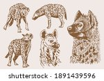 graphical vintage set of hyena  ... | Shutterstock .eps vector #1891439596