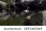 Pink Flamingo Stands In The...