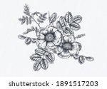 hand drawn roses. botanical...   Shutterstock .eps vector #1891517203