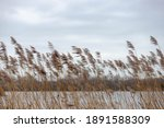 Selective Focus Of Dried Common ...