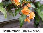 Orange Bright Flowers Of...