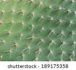 Cactus Surface
