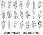 collection forest fern... | Shutterstock .eps vector #1891834789