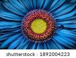 Gerbera Flower Close Up On...