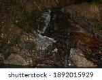 iced hiryu fall in winter