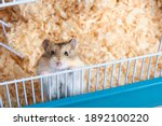 Dzungarian Hamster In A Cage...