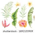 Tropical Elements Palm Leaf...