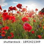 Nice Colorful Poppy Field In...