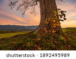Base Of Large Tree At Sunset In ...
