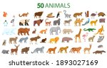 big set of animals. animals... | Shutterstock .eps vector #1893027169