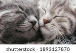 Couple happy kittens sleep...